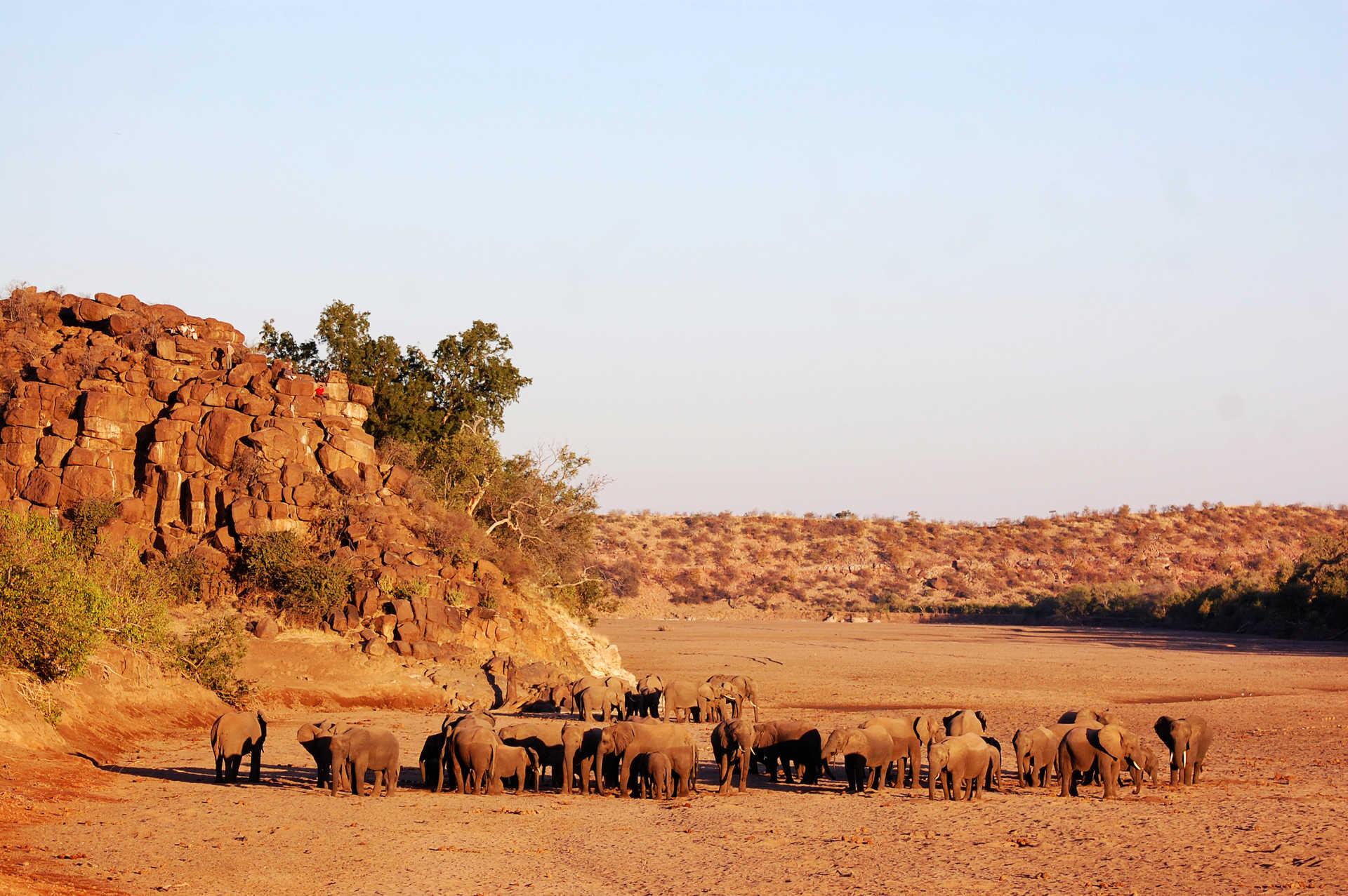 Éléphants sauvages dans la savane