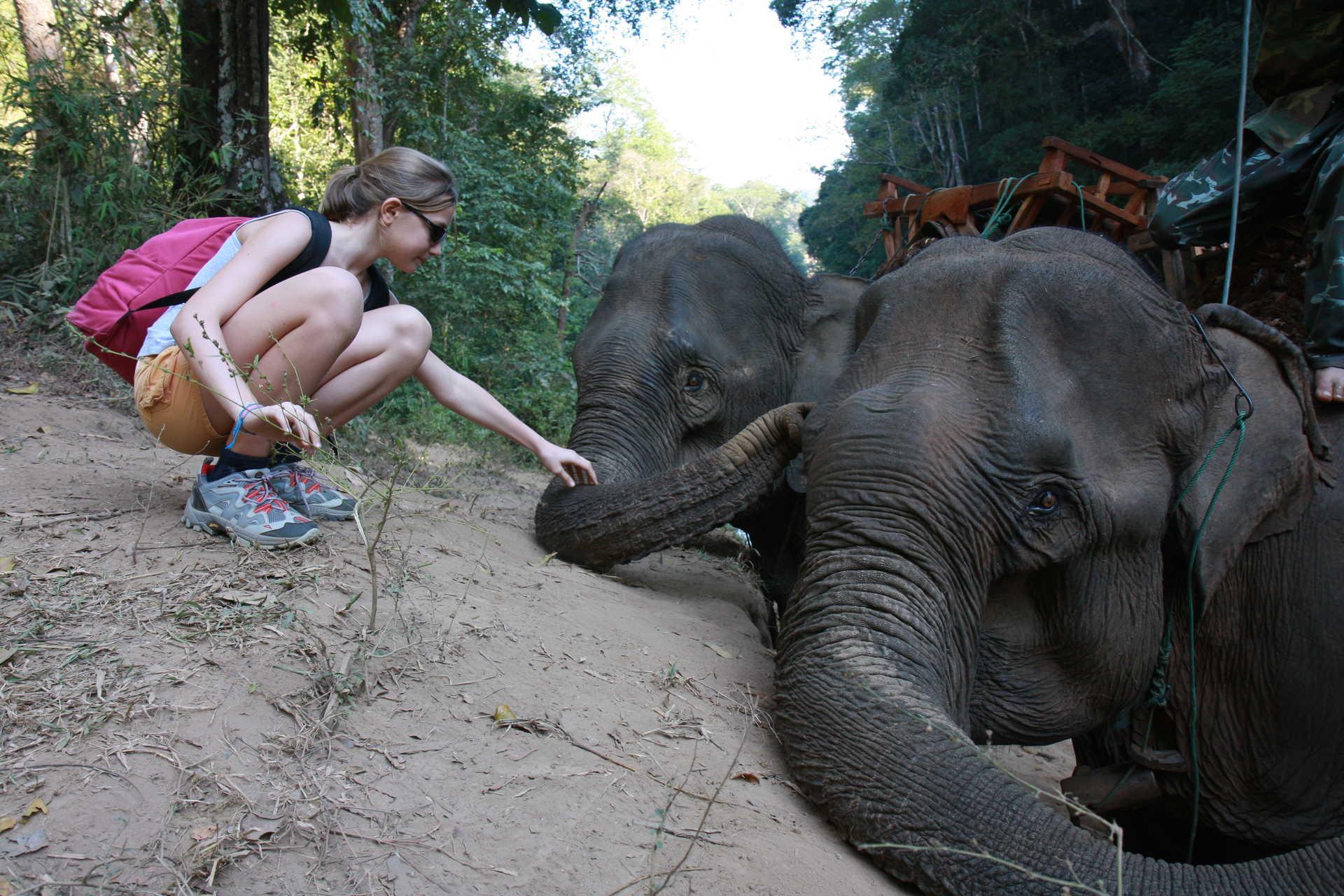 Femme caressant la trompe d'un éléphant