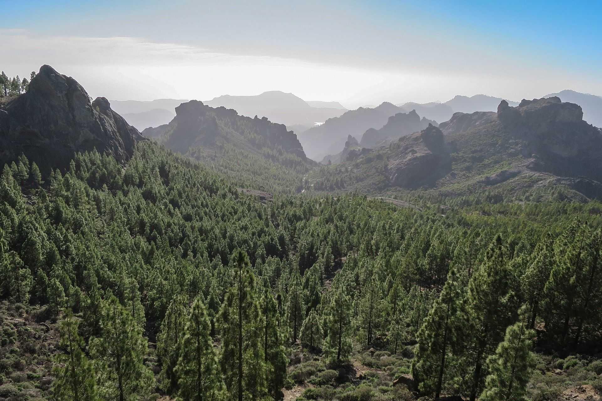 Forêt de l'île de Gran Canaria