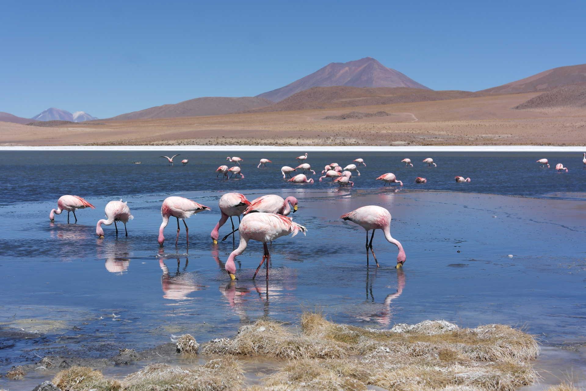 Lac dans le sud lipez en Bolivie