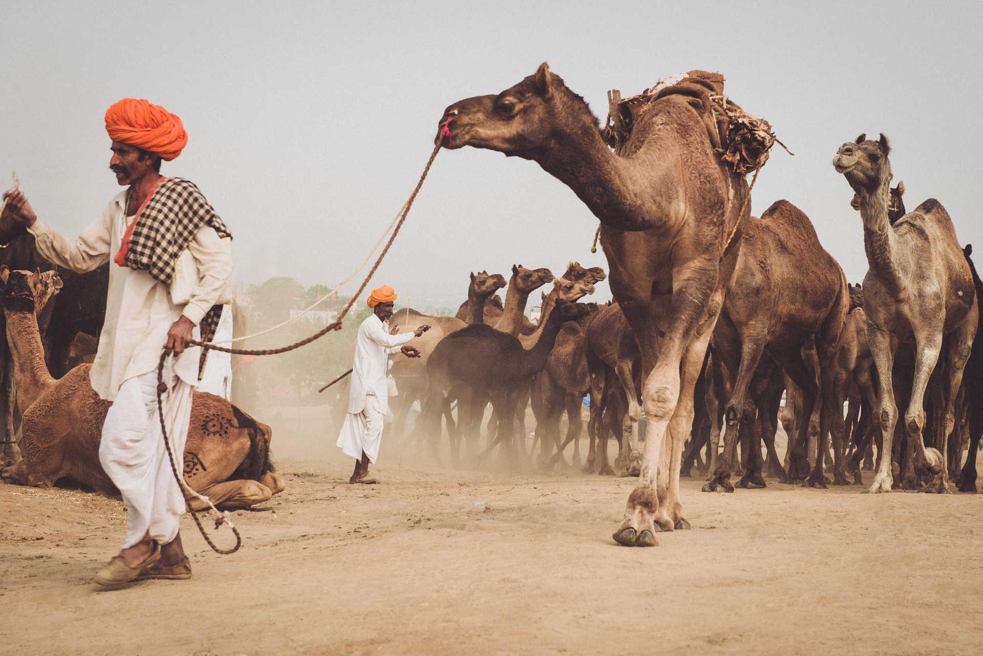 voyage Rajasthan, Inde du nord, festival de Pushkar
