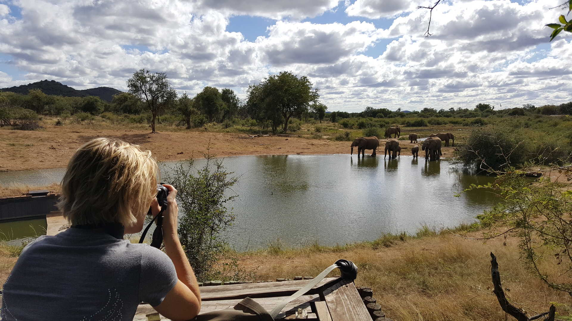 Observation d'éléphants se désaltérant en safari