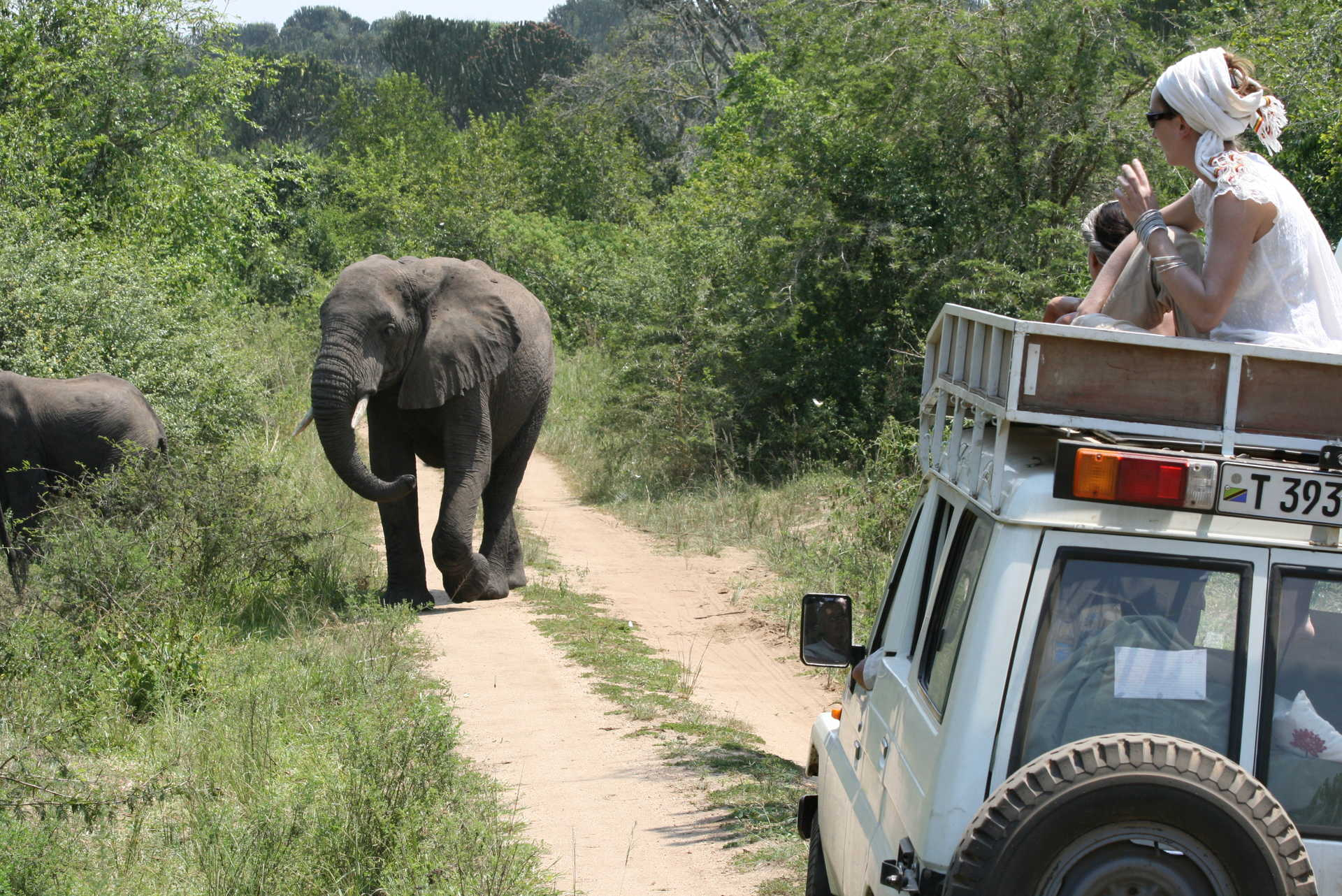 Observation d'un éléphant depuis le 4x4 en safari