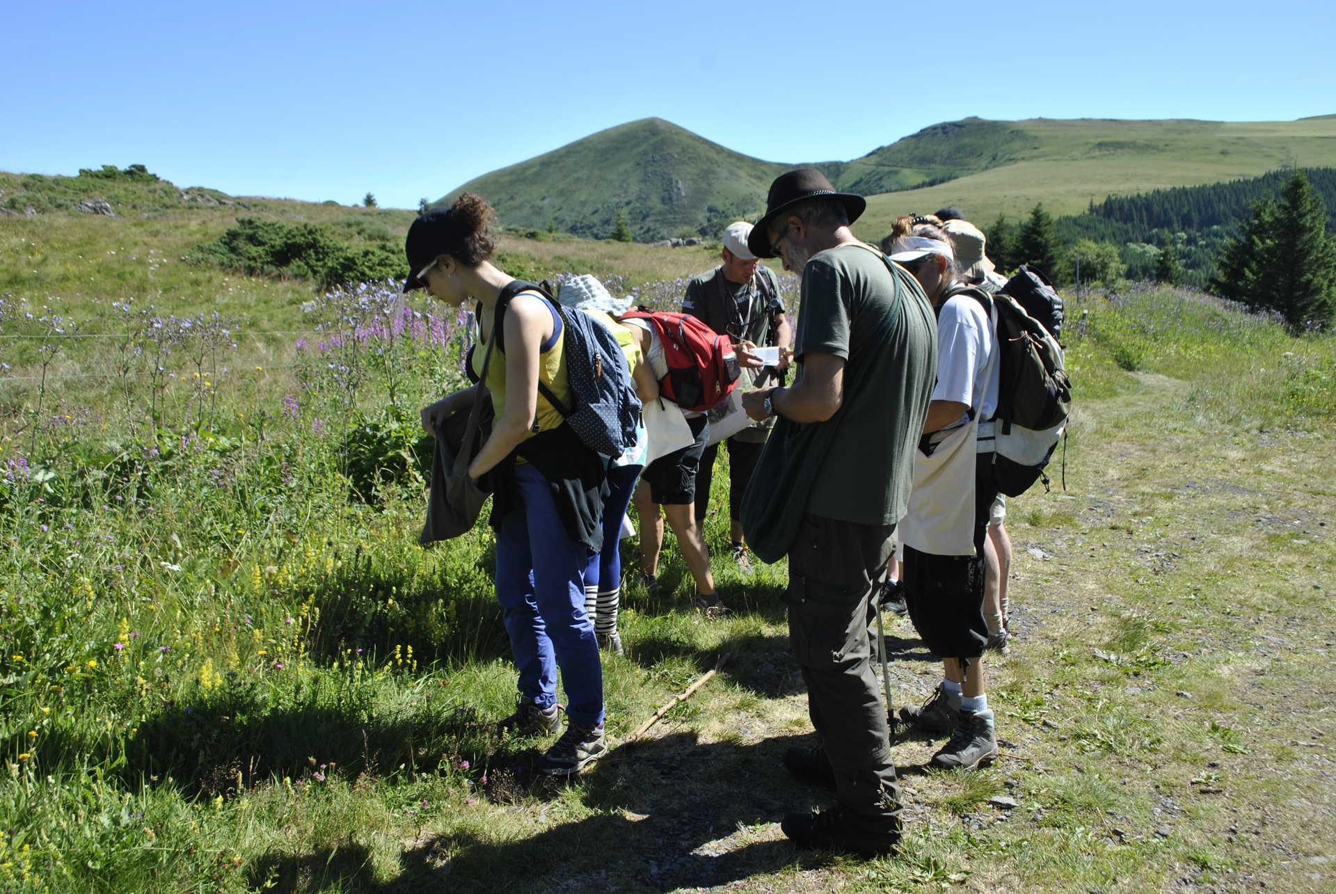 randonnée, Auvergne, cueillette, plantes comestible