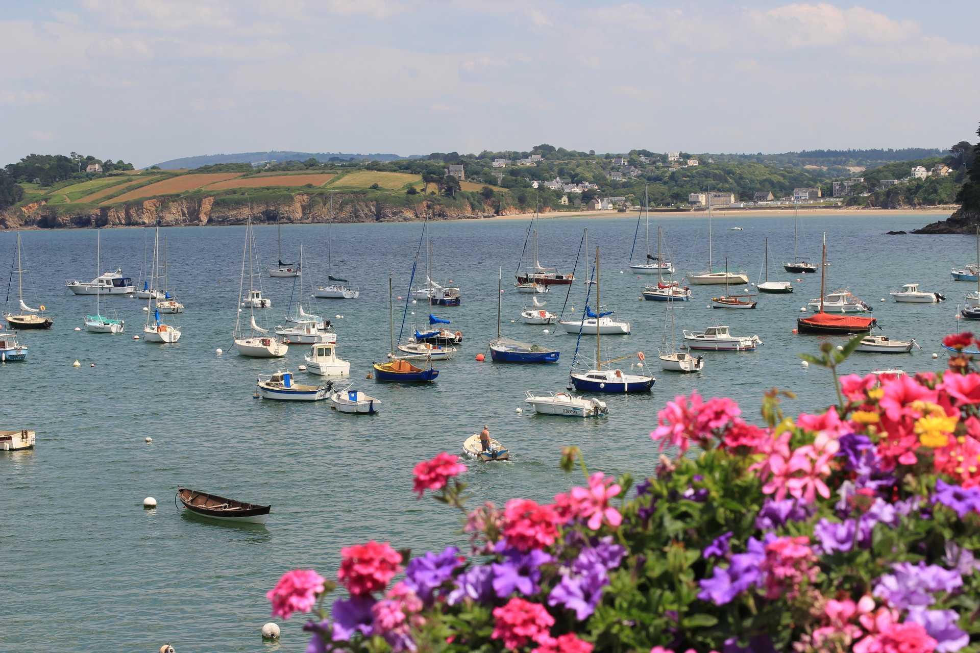 fleurs en premier plan et petit port breton en fond