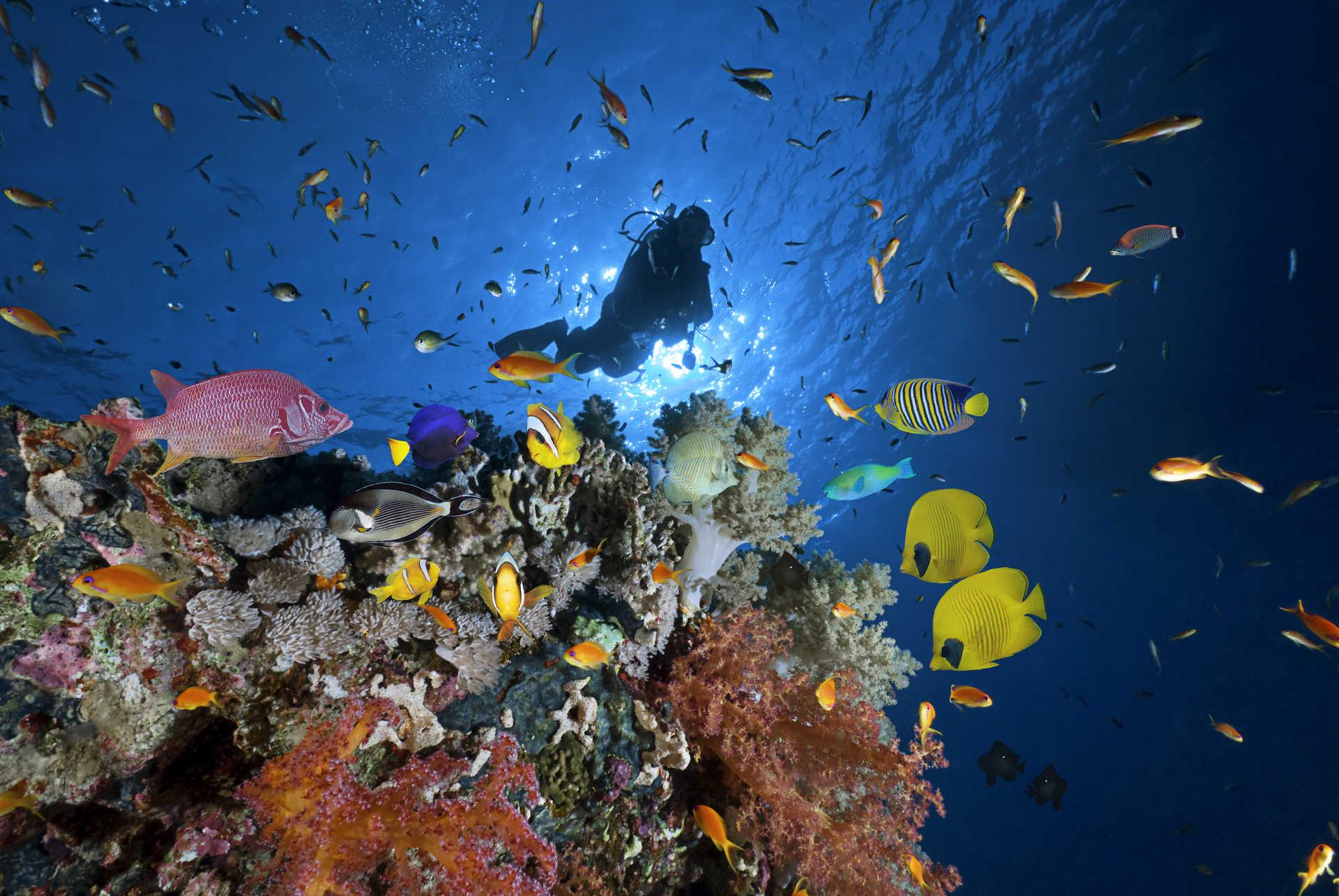 Plongeur au milieu de poissons et corail de la mer Rouge