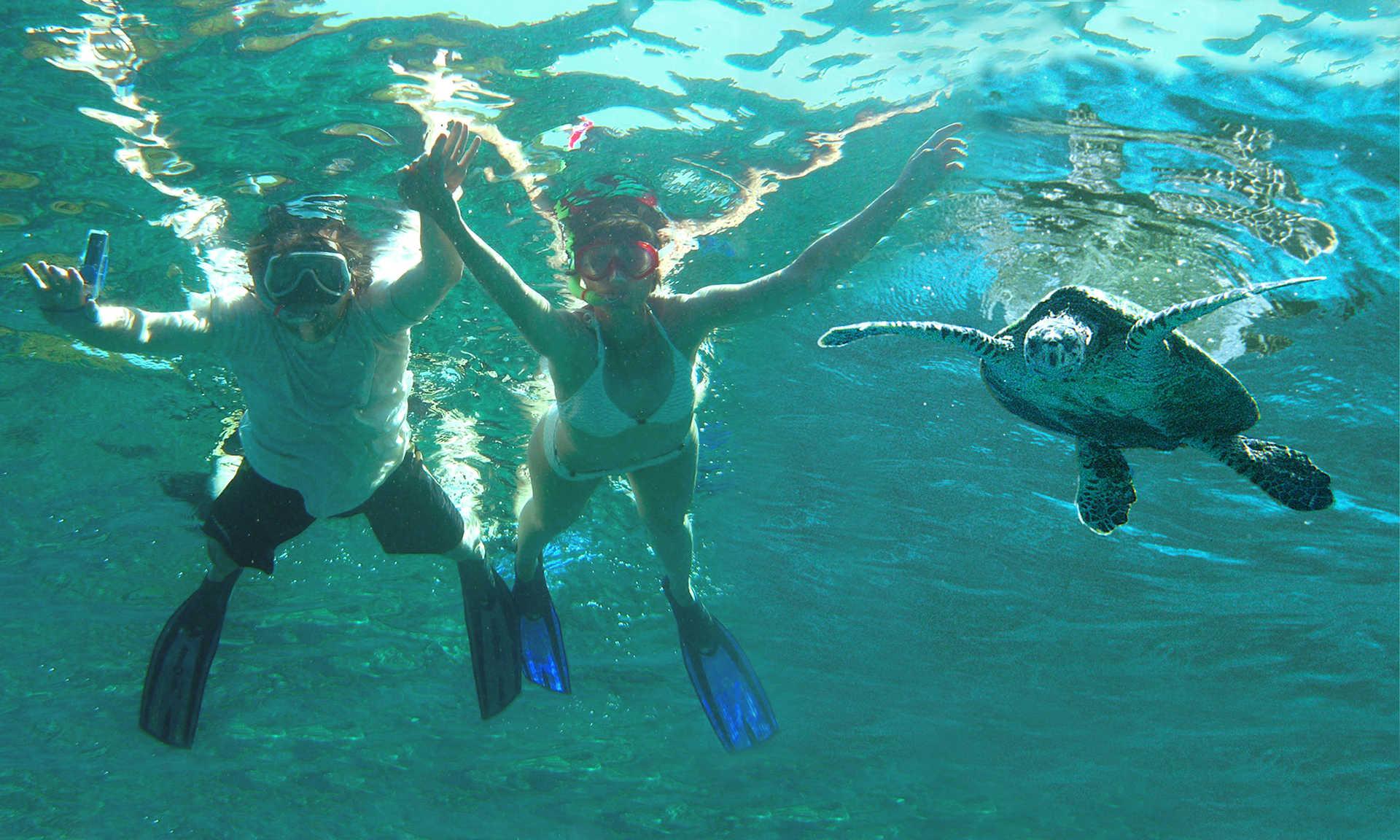 Plongeurs en apnée regardant une tortue