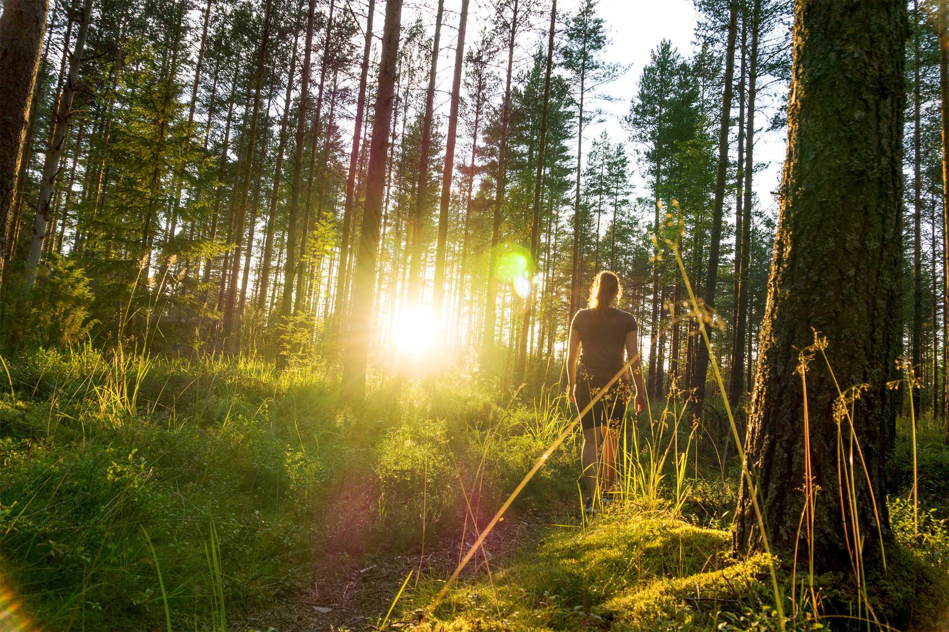 Rando dans la forêt finlandaise