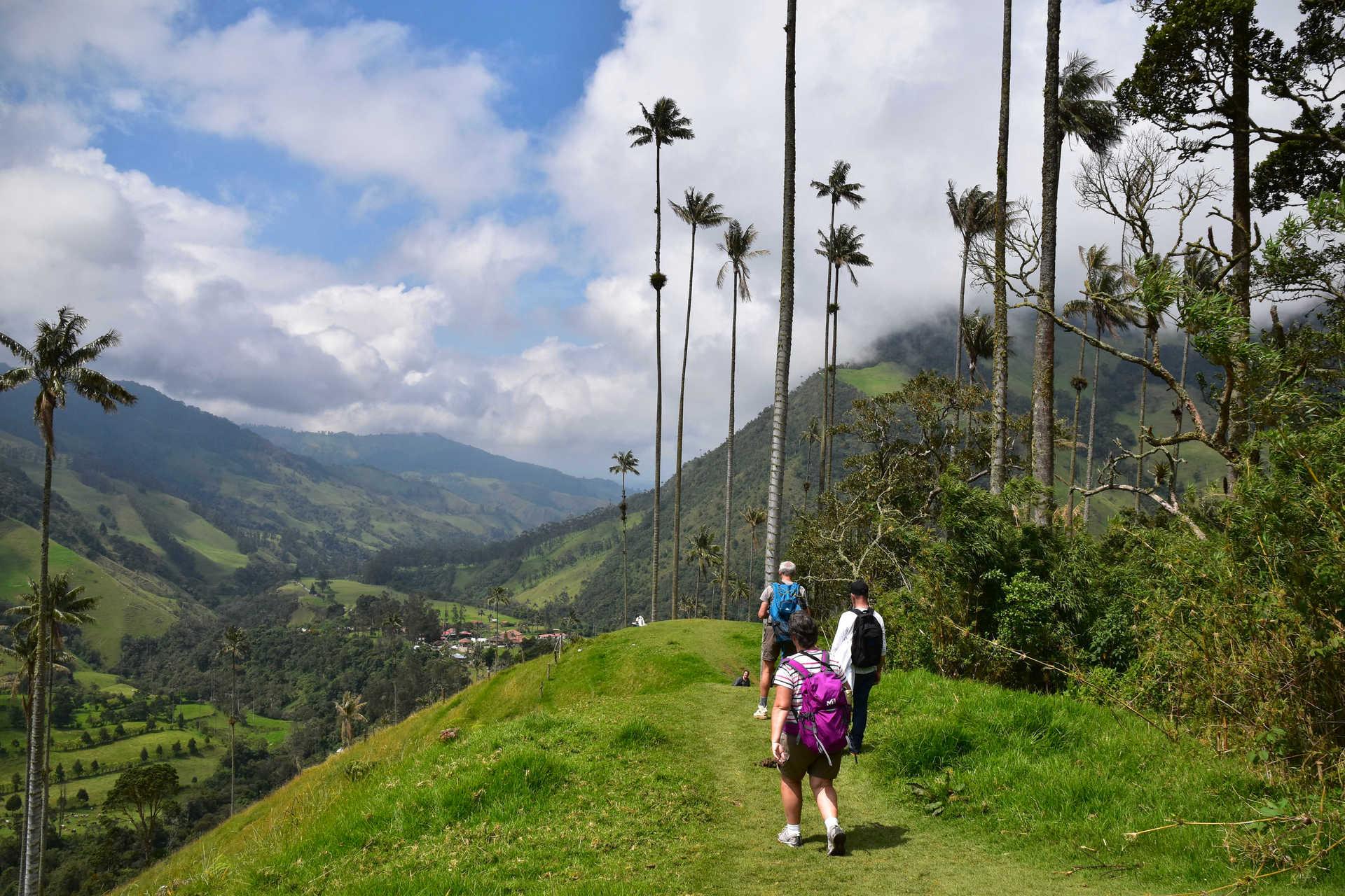 Randonnée dans la Vallée de Cocora