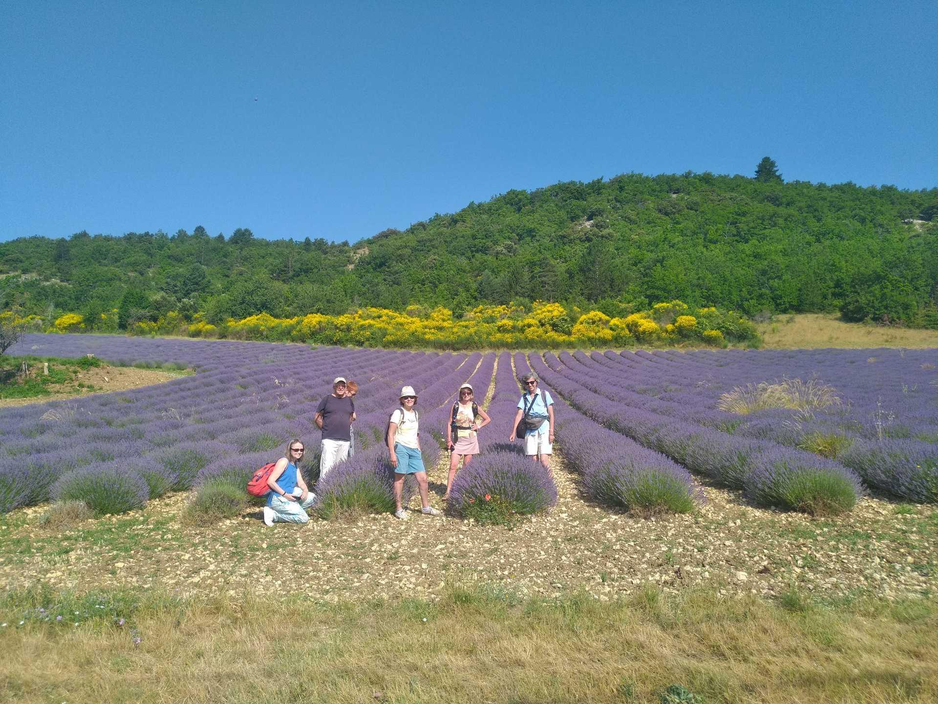 Randonneurs sur le chemin des lavandes en Provence