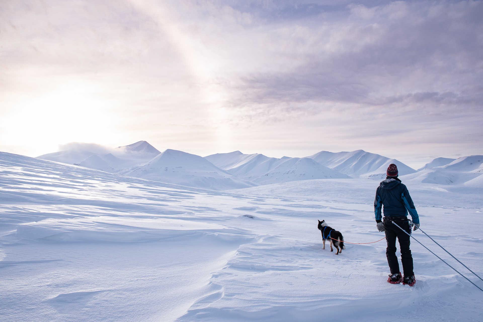 Robin et le chien dans les montagnes de l'arctique