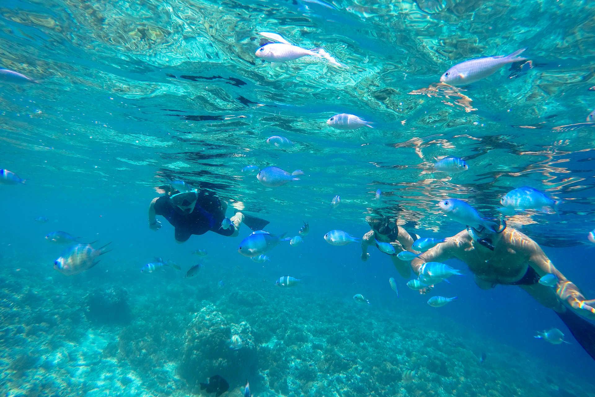 Snorkeling au milieu des poissons dans une eau turquoise
