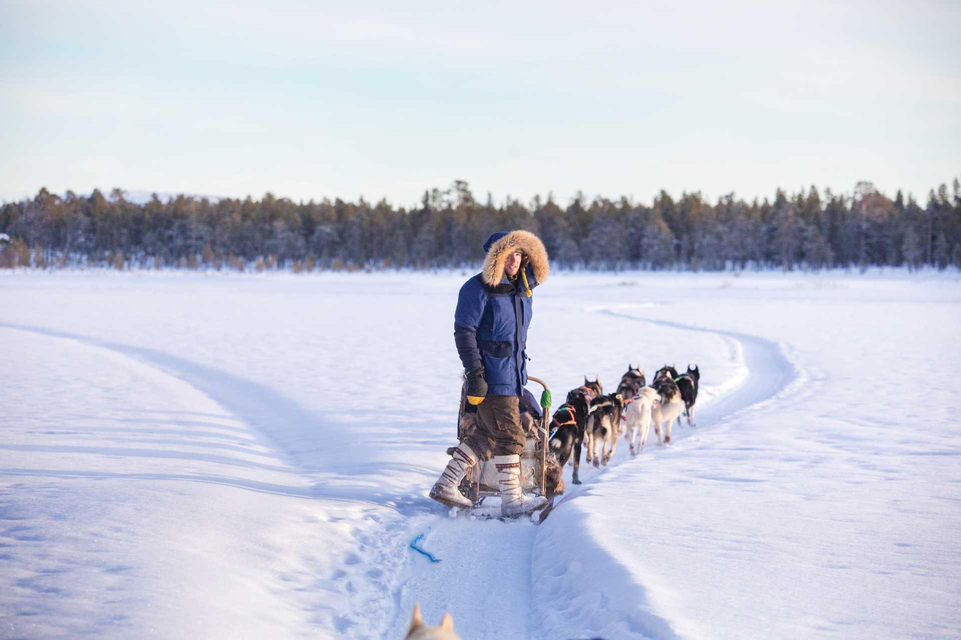 Chien de traîneau sur les lacs gelés de Finlande, Laponie