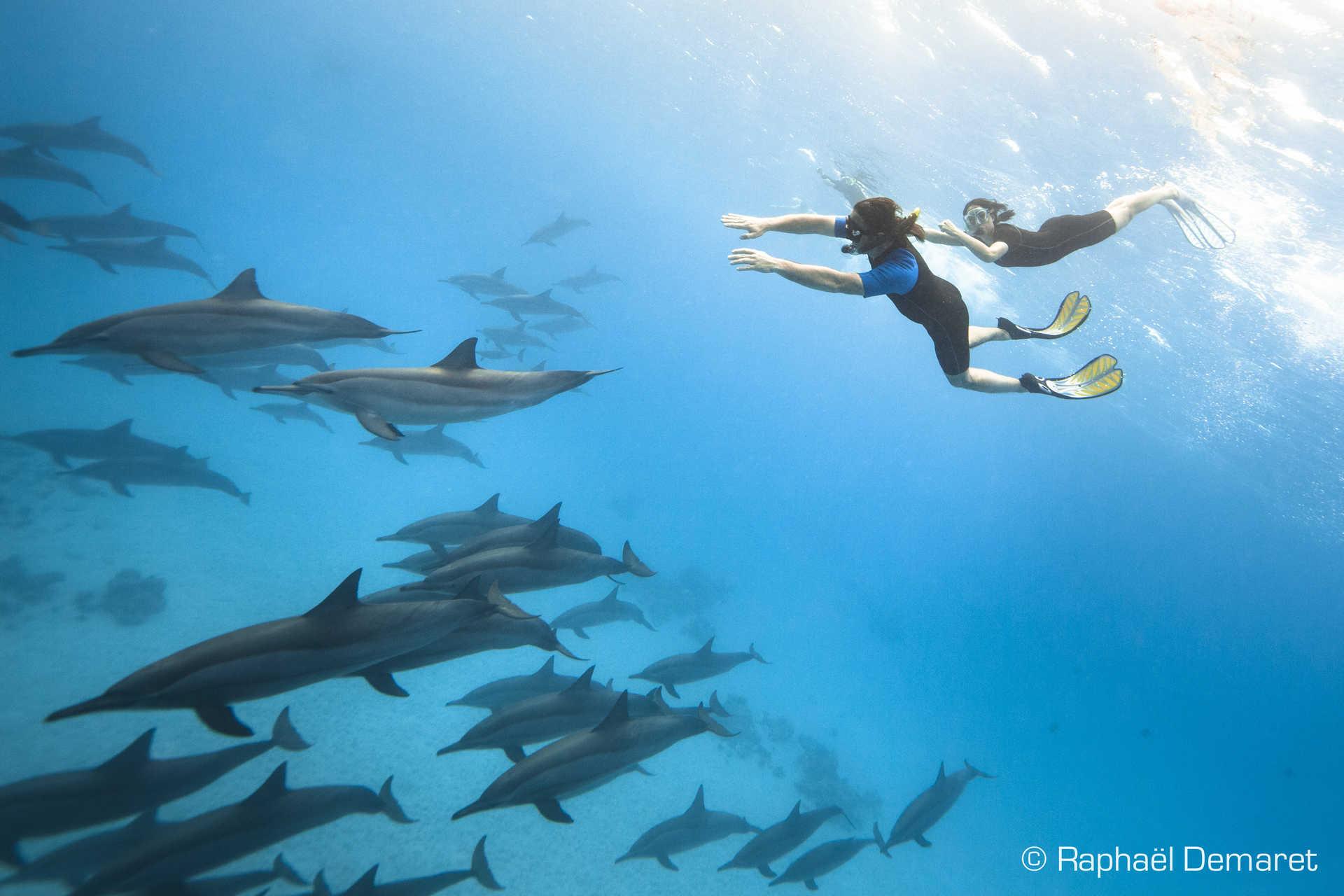 Très taquins, les dauphins adorent jouer avec les snorkeleurs