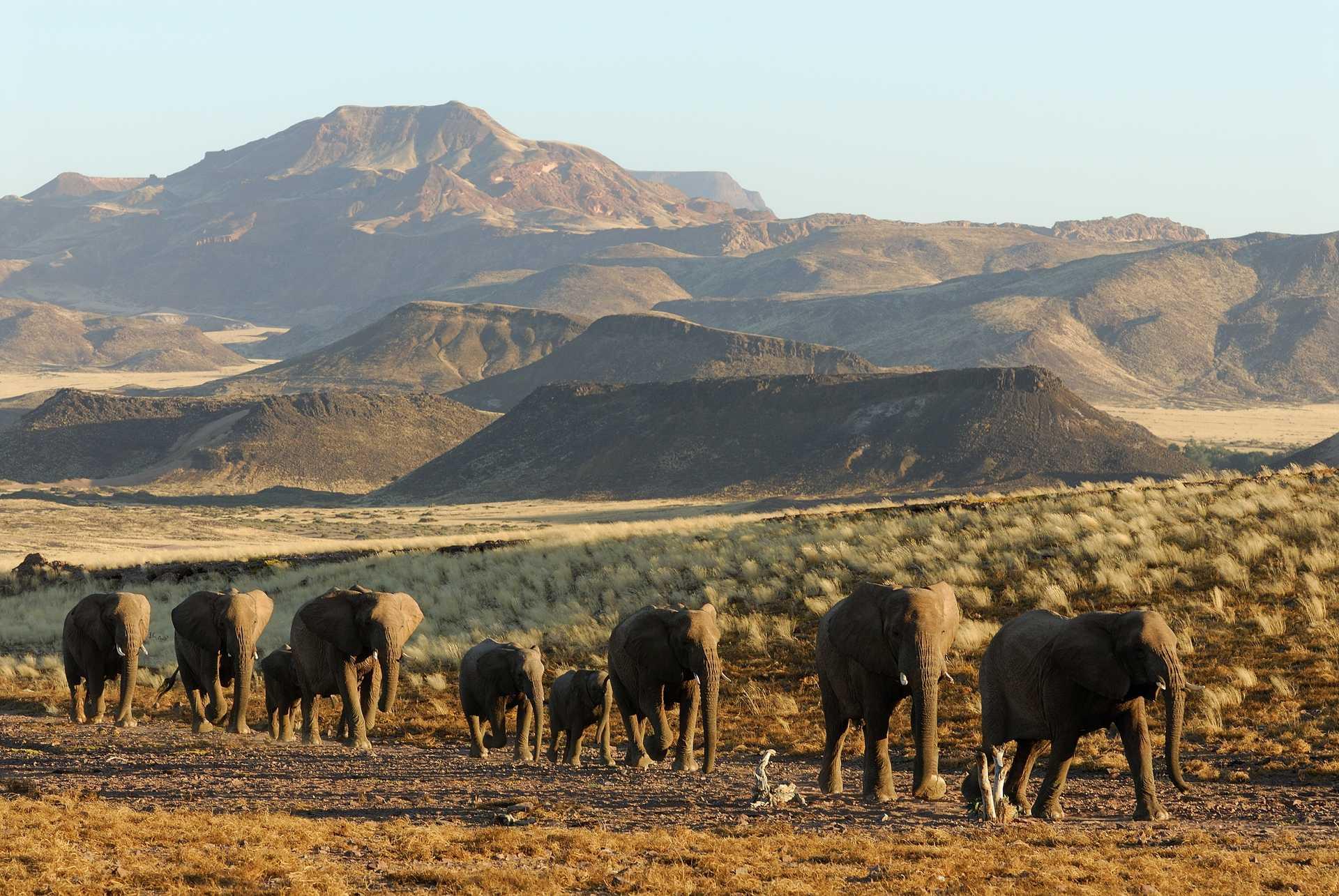 Troupeau d'éléphants en Namibie