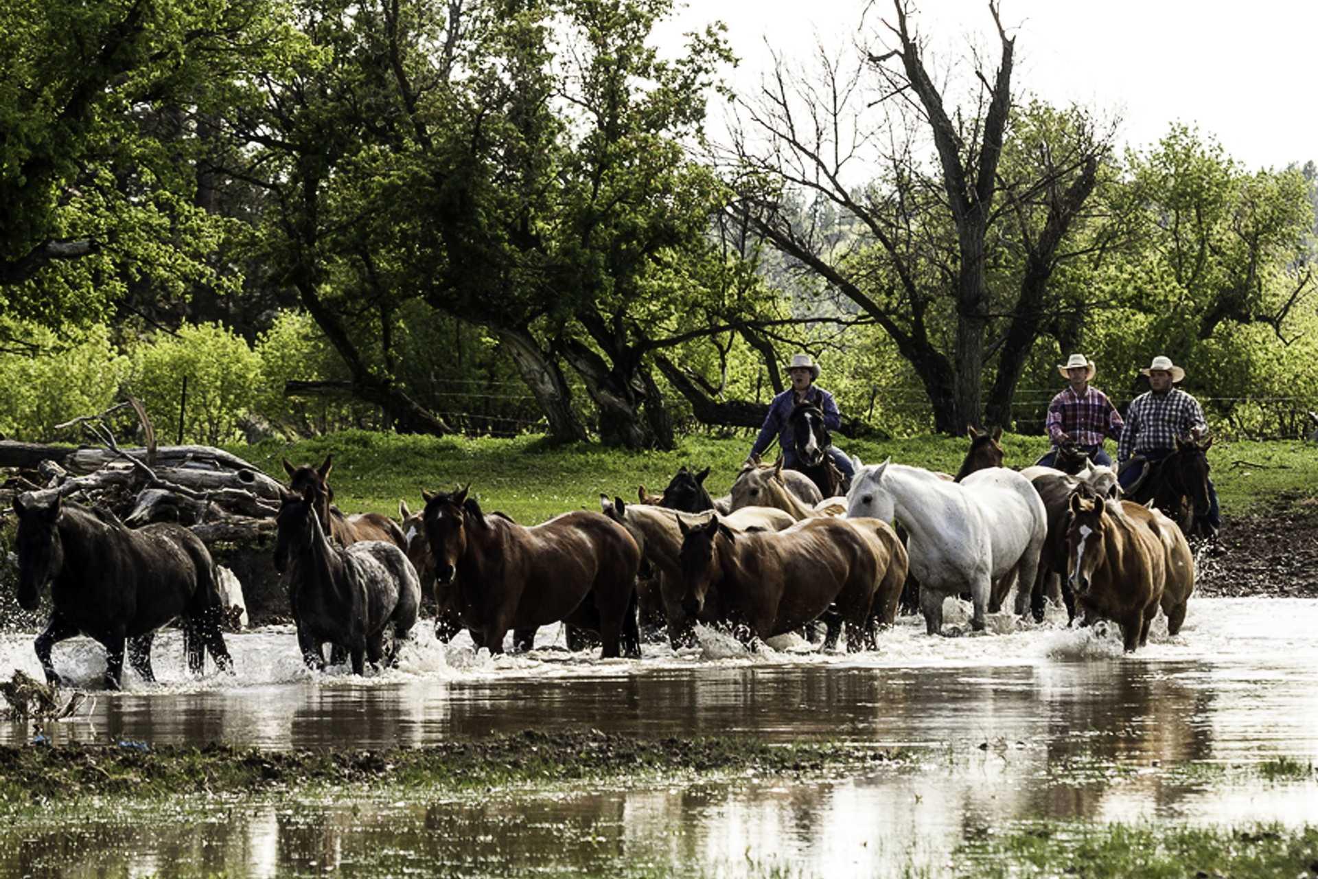 Wyoming en ranch de travail