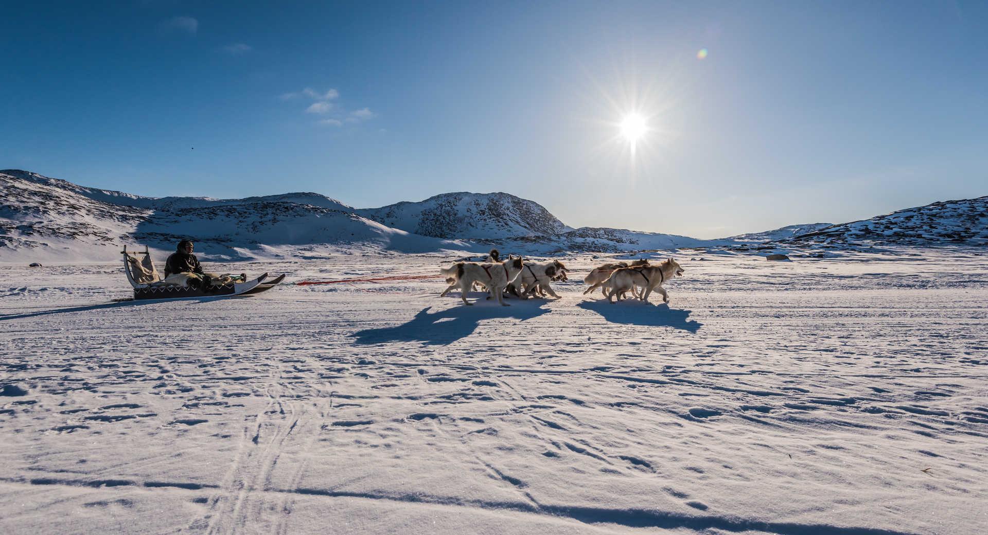 Chien de traineau Inuit Groenland