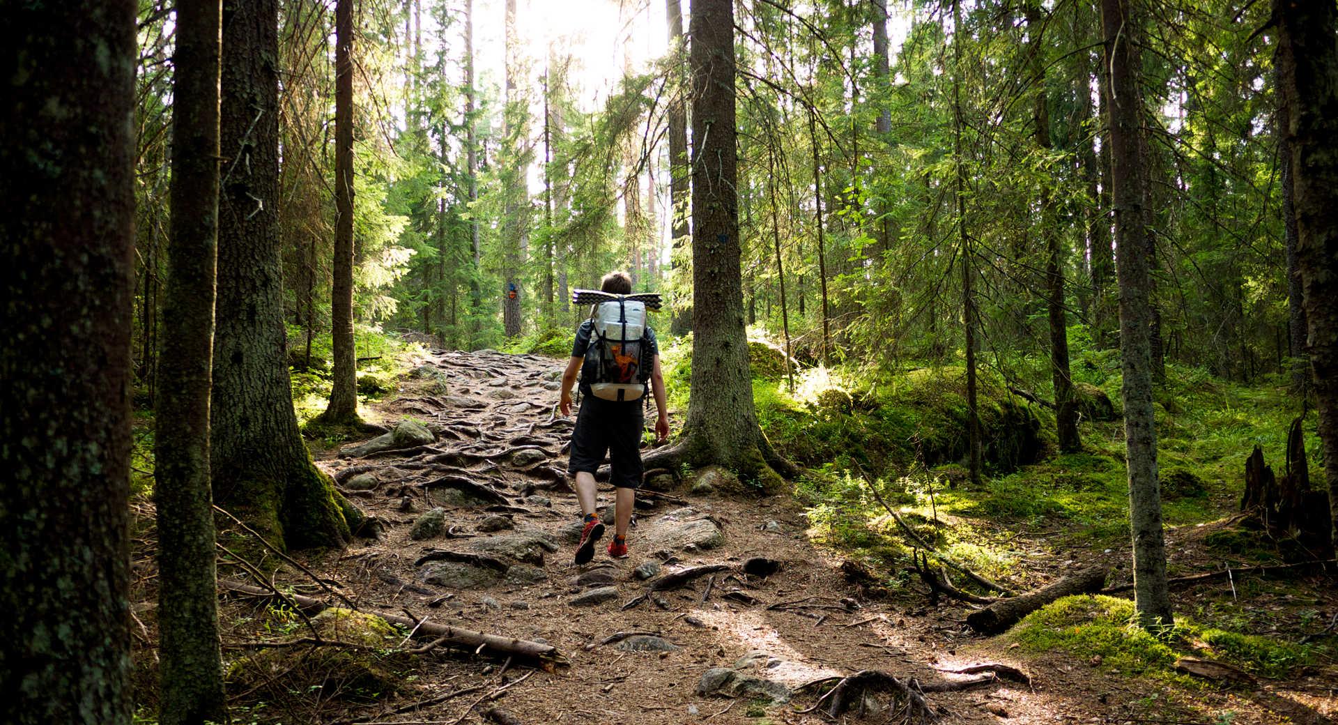 Randonnée dans les forêts de Finlande l'été