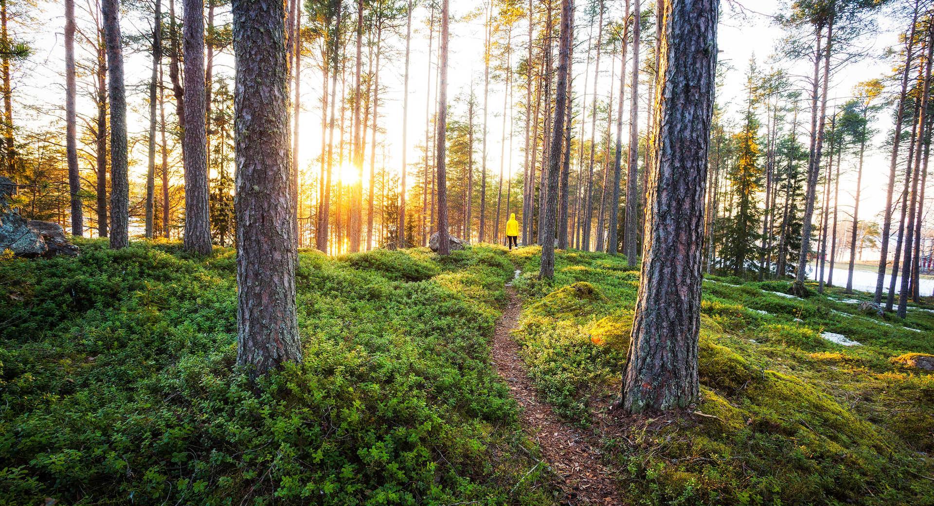 randonnée dans les forêts de Finlande lété