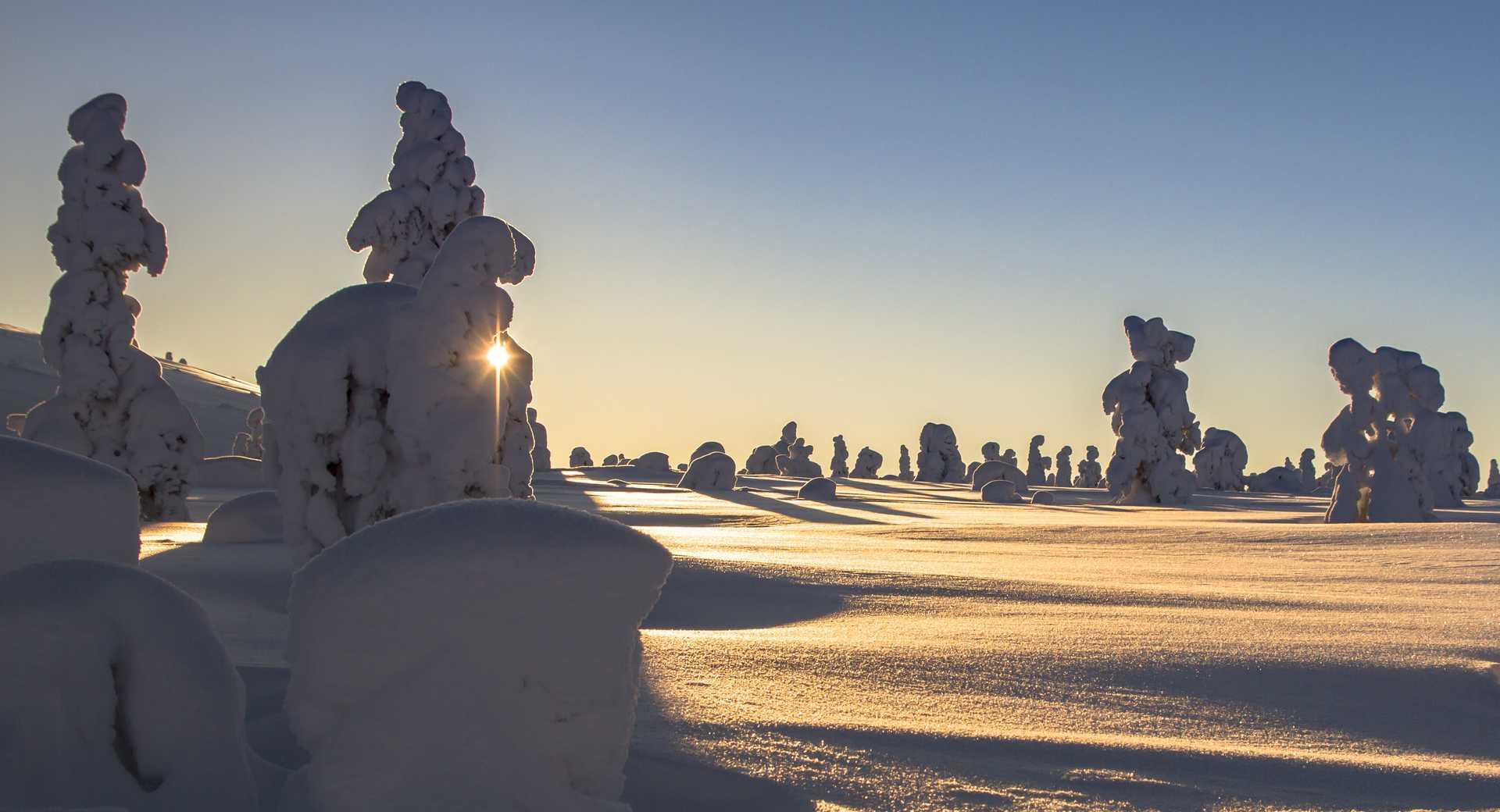 Taiga finlaidaise sous la neige