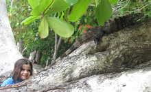 Enfant regardant un Iguane sur un arbre