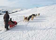 Activité traineau à chiens dans le Queyras