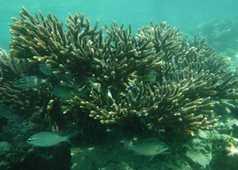 Coraux et poissons dans la baie de sham
