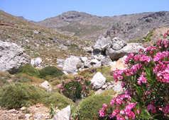 Crète , collines en rocaille et fleurs