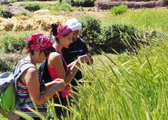 Enseignement guide, Maroc