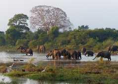Les éléphants dans le parcs nationaux du Sri Lanka