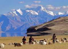Nomades du Changtang, près du lac Tso Moriri