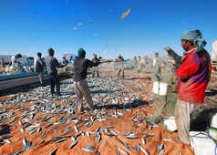 Retour de pêche, Oman