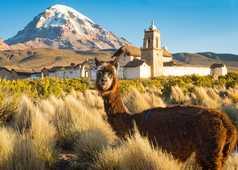 Un lama posant devant une église dans le Parc National de Sajama , en Bolivie