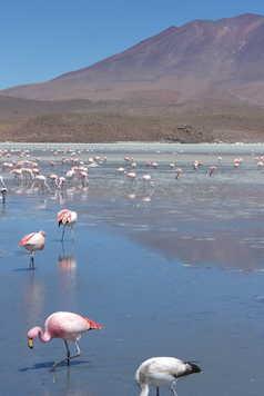 Lac de haute altitude dans le sud Lipez rempli de flamants roses