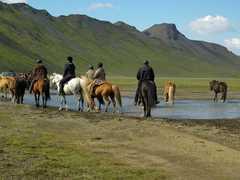 Balade en Islande à cheval