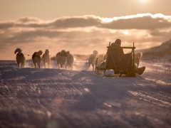 Voyage chien de traineau hiver au Groenland