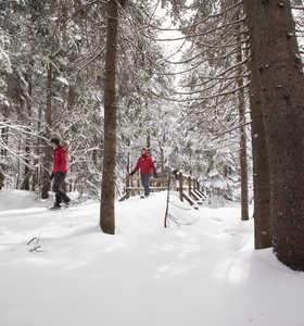Randonnée dans la neige au Québec