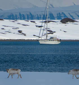 Rennes au Svalbard observé depuis le bateau Sillage