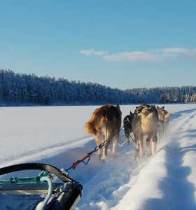 Voyage en chien de traineau en Finlande