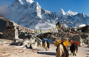 Ama Dablam avec une caravane de yacks et des drapeaux de prière