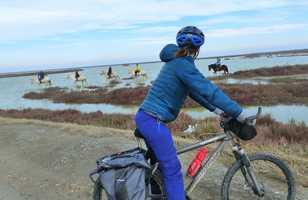 camargue en vélo avec les chevaux