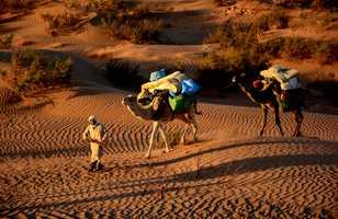 Chamelier et son chargement logistique, Maroc