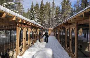 Chenil du camp Taureau l'hiver