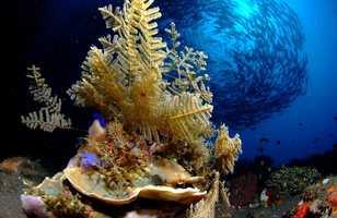 Mecque de la plongée, l'Indonésie offre des décors sous-marins époustouflants
