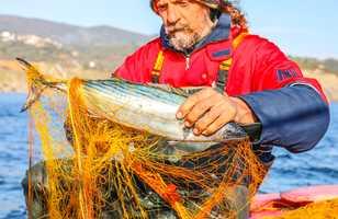 Pêche et gastronomie, voyage cyclades