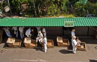 Photo des luges à Funchal