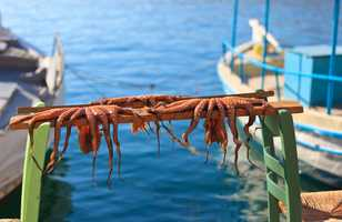Pieuvres fraichement pêchées