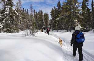 Randonnée avec huskies au Québec l'hiver