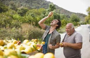 Rencontre avec un agriculteur grec et ses citrons