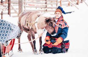 Renne et habitant sami